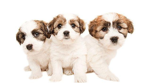 Pup 4
